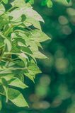 Macro Photography of Green Leafed Plant royalty free stock image