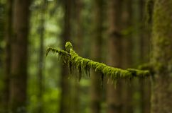 Macro Photography of Green Leaved Tree Royalty Free Stock Images