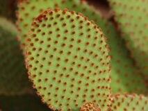 Macro Photography of Green and Red Leaf Plant Stock Photos
