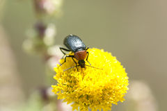 Macro photography of an insect eating. royalty free stock photo