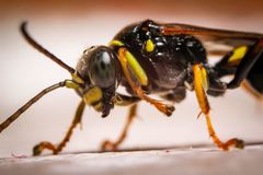 Macro photography of insect royalty free stock images