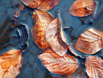 Macro photography of leaves in river Stock Images