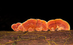 Macro photography of mushroom Stock Images