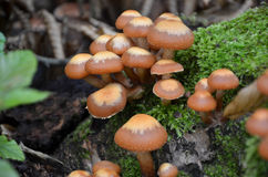 Macro photography of mushrooms in forest Royalty Free Stock Photos