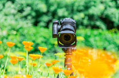 Macro photography in nature. The flowers and plants. Green blurred background.  Stock Photos