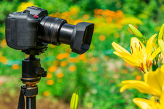 Macro photography in nature. The flowers and plants. Green blurred background.  Royalty Free Stock Image