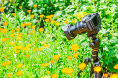Macro photography in nature. The flowers and plants. Green blurred background.  Royalty Free Stock Images