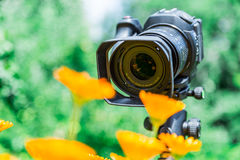 Macro photography in nature. The flowers and plants. Green blurred background.  Royalty Free Stock Photo