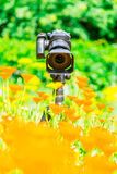 Macro photography in nature. The flowers and plants. Green blurred background.  Royalty Free Stock Photography