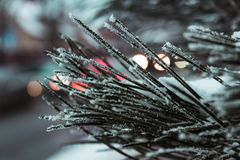Macro Photography of Needle Leafed Plant With Snowflakes Royalty Free Stock Photography