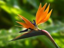 Macro Photography of Orange Flower Royalty Free Stock Photos