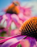 Macro Photography of Petaled Flowers royalty free stock photography