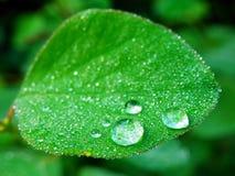 Macro photography of raindrops on green leaf Stock Image