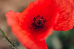 Macro Photography of Red Flower stock photo
