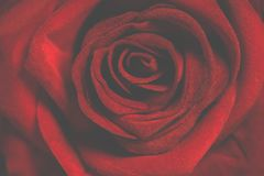 Macro Photography of Red Rose Royalty Free Stock Photos