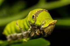 Macro photography showing a caterpillar. Macro photography showing a close up view of beauty flora and fauna Stock Image