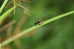Macro photography showing a grass hopper. Macro photography showing a close up view of beauty flora and fauna Royalty Free Stock Photos