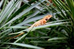Macro photography showing an orange lizard. Macro photography showing a close up view of beauty flora and fauna Royalty Free Stock Image