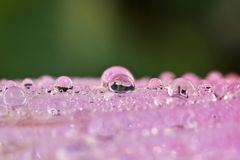 Macro photography showing a water droplet for background. Macro photography showing a close up view of beauty flora and fauna stock photography