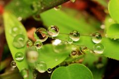 Macro photography showing a water droplet. Macro photography showing a close up view of beauty flora and fauna stock photo