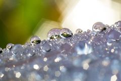 Macro photography showing a water droplet. Macro photography showing a close up view of beauty flora and fauna royalty free stock photography