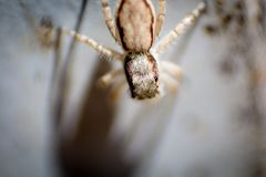 Macro photography: Spider crawling down the wall. Hit by the sunlight and creates dramatic shadow royalty free stock photography