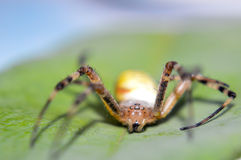 Macro photography of spider Stock Photos