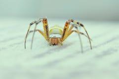 macro photography of spider Stock Photo