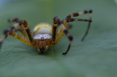 Macro photography of spider Royalty Free Stock Photography