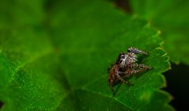 Macro Photography of Spider On Leaf Stock Photos