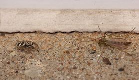 Spider vs Fly - Macro Close Up Shot Royalty Free Stock Photos