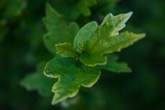 Macro photography. top leaves of a bright green tree on a beautifully blurred green background. natural background stock photography