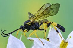 Macro Photography of Wasp on Flower Stock Image