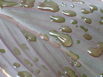 Macro photography with water drops on green leaf Stock Photos