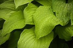 Macro Photography of Water Drops on Green Leaves stock photography