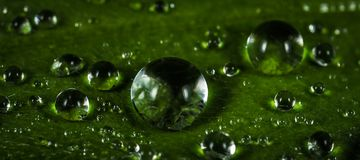 Macro Photography of Waterdrops Royalty Free Stock Photo