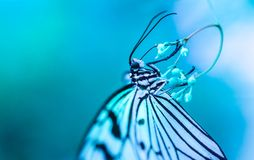 Macro Photography of White and Black Butterfly stock image
