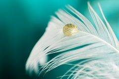 Yellow droplet on white feather. Macro photography for a yellow droplet on white feather with green background Royalty Free Stock Photography