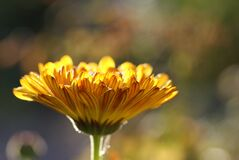 Macro Photography of Yellow Flower Royalty Free Stock Images