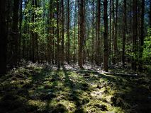 Macro photos with landscape background of a dark forest with fallen old trees Royalty Free Stock Photos