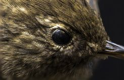 Macro picture of a birds eye. In a college in the Faroe Islands stock photography