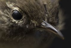 Macro picture of a birds eye. In a college in the Faroe Islands royalty free stock photography
