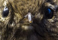 Macro picture of a birds eye. In a college in the Faroe Islands stock photo