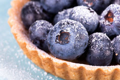 Macro picture of blueberries tart Royalty Free Stock Image