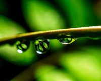 Macro picture of dew drops on the branches have a reflection of the plants inside stock photo