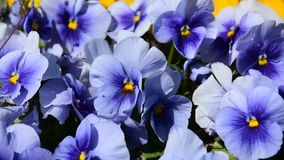Macro picture of flowers in a garden stock video footage