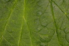 Macro picture of a green leaf structure. Close up royalty free stock images