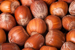 Macro picture of hazelnuts Royalty Free Stock Images