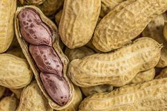 Macro picture of peanuts seed Stock Photography