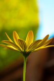Macro Picture of a Yellow flower Stock Photo
